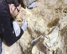 آثار کشفشده گورستان سرند هریس به بلژیک ارسال شد